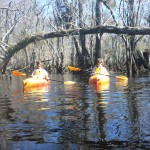 Kayaking on the Black River in the Three Sisters Swamp